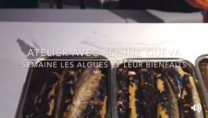 Découvrez les algues à Lorient du 22 au 27 janvier 2018