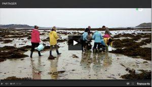 Algues : les délices de la mer