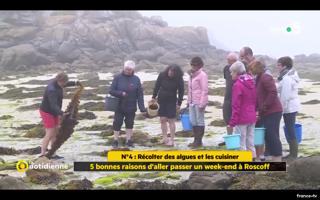 Une sortie algues à Roscoff, France 5