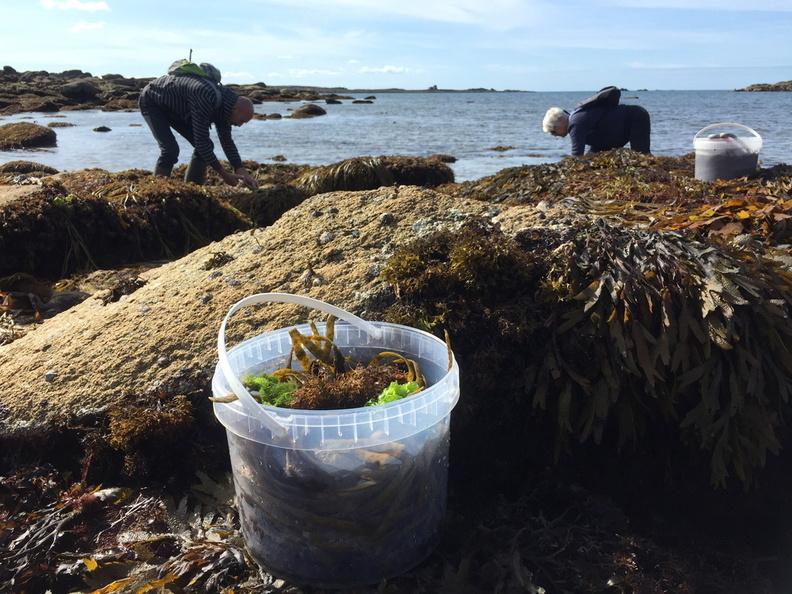 « Sorties algues : le calendrier bientôt en ligne… patience j'y travaille ! »